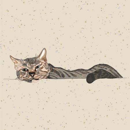 gato dibujo: mano dibujo del gato perezoso en papel reciclado