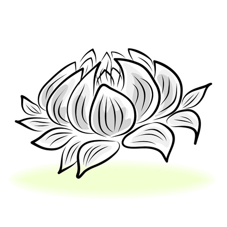 hand drawing water lily, lotus, flower. Иллюстрация