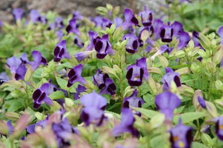 sustain: violet flowers on green background Stock Photo