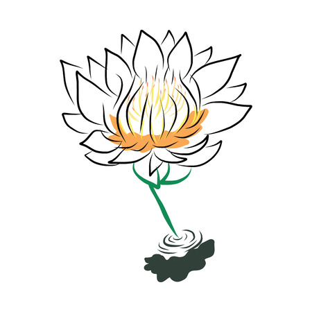 nymphaea: hand drawing water lily, lotus, flower. Vector EPS10