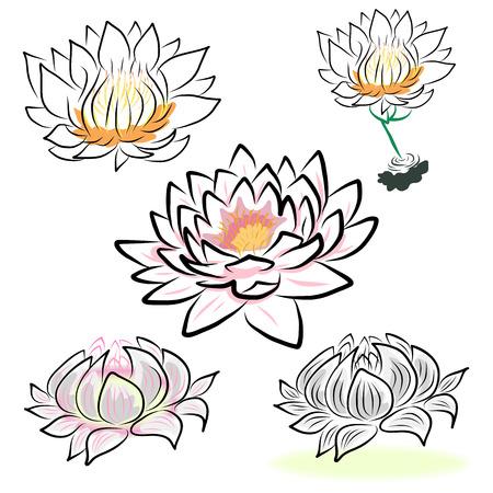 jardines flores: dibujo a mano lirio de agua, flor de loto, flor.