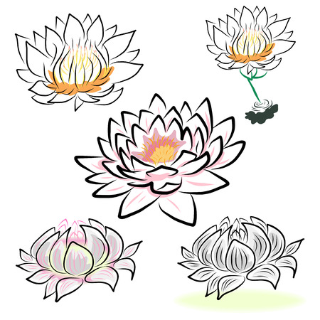 hand drawing water lily, lotus, flower.  Vector