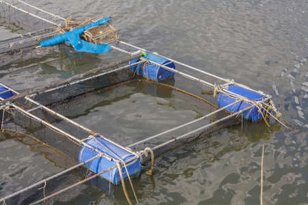Cage fish farming in sea water by natural sources photo