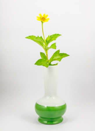 Flowers in a vase on a white background photo