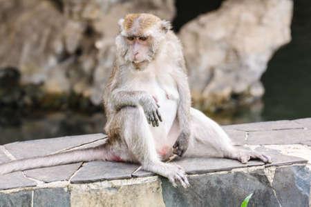 One monkey sitting on a rock bar photo