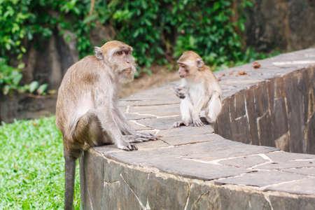 Two monkey sitting on a rock bar photo