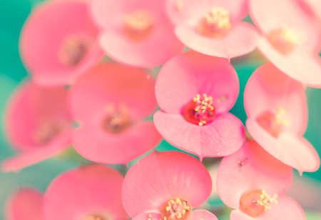 Cactus flower pink soft background photo