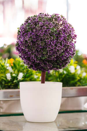 bloemen wit zwart: Potted flowers, white with purple flowers.
