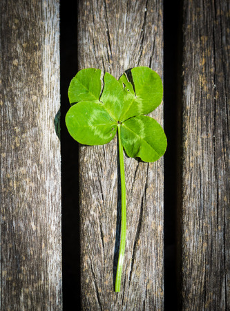 brings: Four-leaf clover brings good luck on wood background