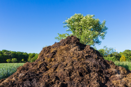 manure, which lies in the field to fertilize crops. Spring. close-up Stock Photo