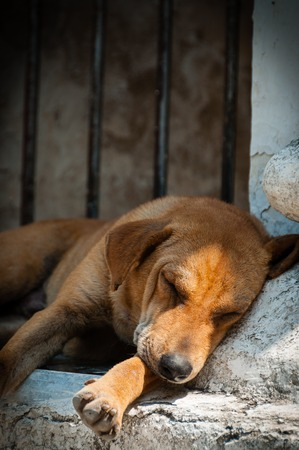 sleeping pad: Orange dog sleeping at a temple in Mandalay Burma Myanmar