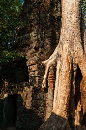 phrom: Tree on a temple at Ta Prohm Angkor Wat