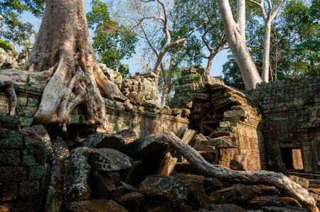 phrom: Tree on a wall at Ta Prohm temple Angkor Wat