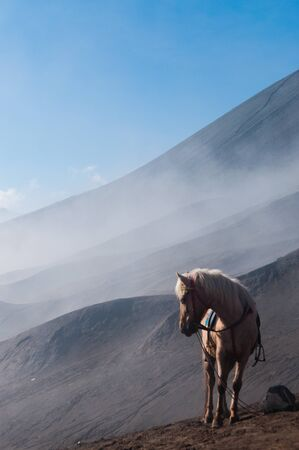 murk: A White Horse in front of mountains near sulphur Volcano Bromo Stock Photo