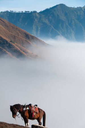 murk: Lonely Brown Horse in front of mountains and blue sky next to sulphur Volcano Bromo