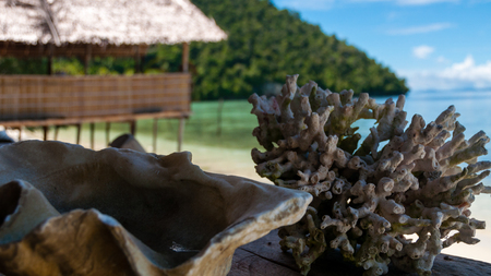 papua new guinea: Shell and Coral laying in front of a bamboo hut at a sand beach in Raja Ampat, Papua New Guinea, Indonesia