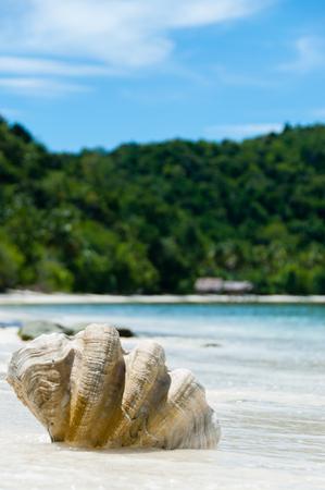 Nuova Guinea: Shell sulla spiaggia di sabbia bianca di fronte oceano blu e verde isola, Raja Ampat, Papue Nuova Guinea, Indonesia