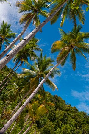Nuova Guinea: Molto alto palme sulla spiaggia e sotto il cielo blu brillante a Raja Ampat, Papua Nuova Guinea, Indonesia