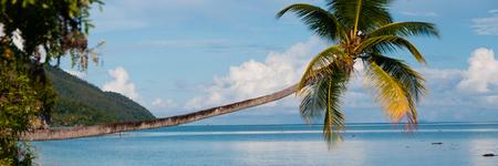 new guinea: Caduto albero di cocco appeso orizzontale sopra l'oceano blu in una spiaggia a Raja Ampat, Papua Nuova Guinea, Indonesia Archivio Fotografico
