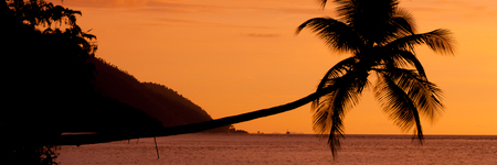 papua new guinea: Orange sunset Silhouette of a horizontal palm tree hanging over the sea at a beach in Raja Ampat, Papua New Guinea, Indonesia