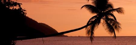 Nuova Guinea: Arancione tramonto Silhouette di una palma orizzontale a picco sul mare in una spiaggia a Raja Ampat, Papua Nuova Guinea, Indonesia Archivio Fotografico