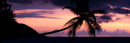 new guinea: Colorato tramonto Silhouette di una palma orizzontale a picco sul mare in una spiaggia a Raja Ampat, Papua Nuova Guinea, Indonesia