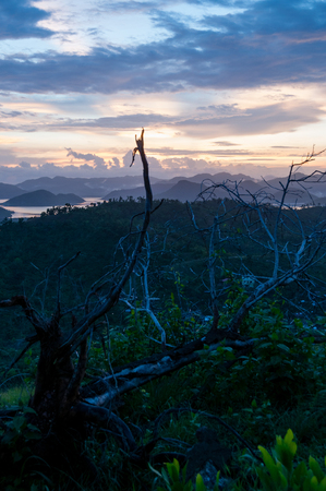 coron: Dead tree on top of a hill overview over ocean and island near Coron, Palawan, Philippines