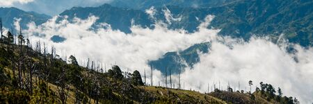 billow: Some Trees at green slope in front of a big blue mountain Tajamulco with cloudscape in Guatemala Stock Photo