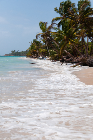 corn island: Palm Trees in the wind on white sand beach coast under blue sky tropical caribbean Corn Island in Nicaragua Stock Photo