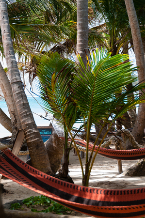 chillout: Closeup of Hammock chillout relax Tied to Coconut Trees at the beach on Corn Islans Bar in Nicaragua Stock Photo