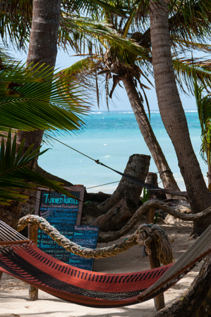 chillout: Closeup of Hammock for relax chillout Tied to Coconut Trees at the beach on little Corn Island Bar in Nicaragua