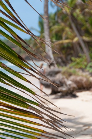corn island: Lonely caribbean white sand beach and coconut palm trees behind leaves on little corn island in Nicaragua Stock Photo