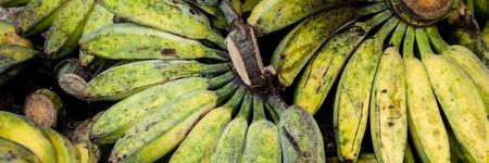 toraja: Unripe Cardava green and yellow Bananas for Sale at local market in Tana Toraja, Sulawesi Indonesia Stock Photo