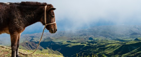 santiago cape verde: Closeup Donkey standing sideways on mountain above the clouds of cape verde island off the coast of africa