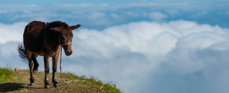 wild donkey: Closeup Donkey standing sideways on mountain above the clouds of cape verde island off the coast of africa