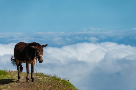 Closeup Donkey standing sideways on mountain above the clouds of cape verde island off the coast of africa