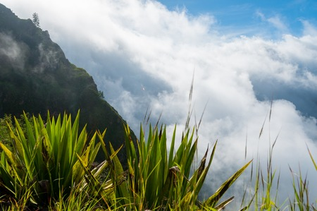 exotic plant: Green exotic palm tree plant above clouds up in the mountain of cape verde island in africa