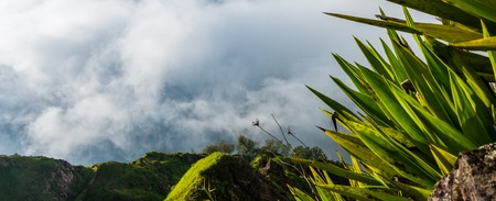 santiago cape verde: Green exotic palm tree plant above clouds up in the mountain of cape verde island in africa