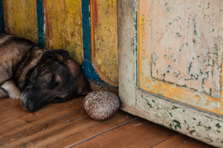 shephard: A shepherd dog laying on the ground in old colonial house in Salento Colombia Stock Photo