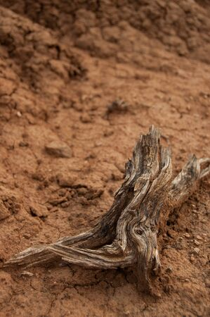 parch: Closeup of wood branch on sand in hot dry desert of Tatacoa, Huila, Colombia