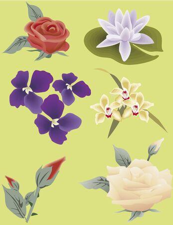 beautifoul flowers