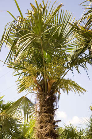 beautiful palm tree in the middle of a day