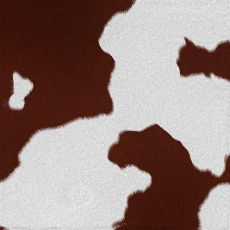 Vache laitière en fourrure fond ou la texture
