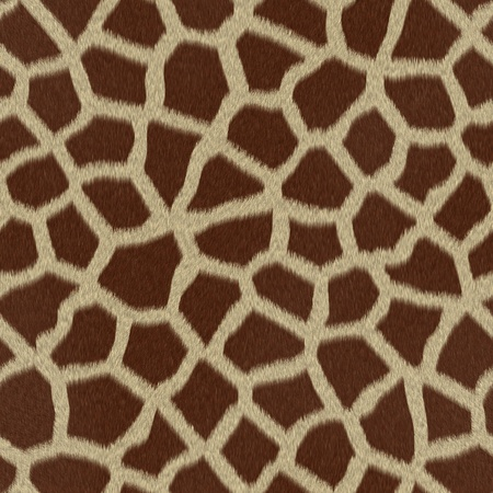 Giraffe fur  skin  background or texture Stock Photo