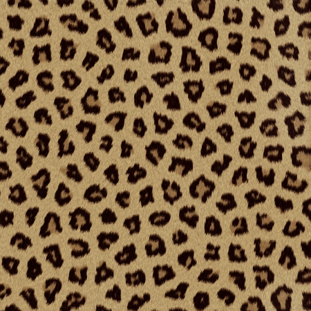 leopard cat: Leopard fur  skin  background or texture Stock Photo
