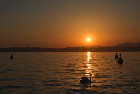 Swan silhouette in the rays of setting sun on Garda lake, Italy Stock Photo