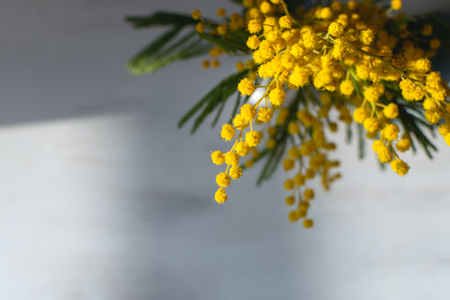 Spring flower background, mimosa flower on gray background, copy space, symbol of 8 March, happy women's day, hard natural sun light, deep shadows