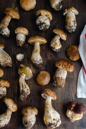 Raw edible penny bun porcini mushrooms on rustic dark wooden background.