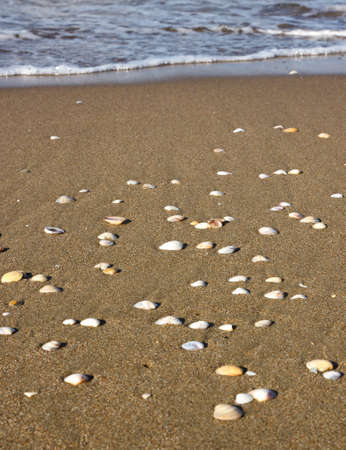 Group of shell on the brown and wet sand near the sea photo