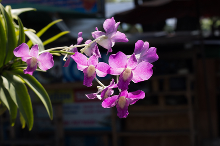 pink orchid: Pink orchid